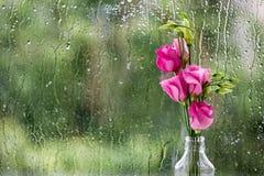 Eustomas in rain Stock Image