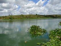 Eutrofização no rio brasileiro fotografia de stock