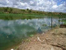 Eutrophication in Braziliaanse rivier Royalty-vrije Stock Afbeelding
