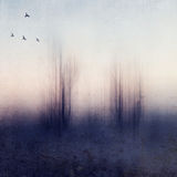 Evaporating Trees Stock Images