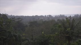 Tropical and monsoon rain video. Evaporation in humid tropical forest during monsoon rain season. Timelapse video stock video footage