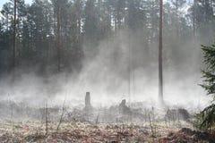 Evaporazione in natura Fotografie Stock Libere da Diritti