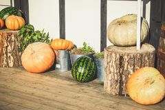 On the eve of Halloween, pumpkins near the house are decorated w stock photo