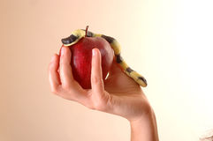 Eve temptation. By snake with apple Stock Image