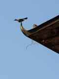 Eveas dell'uccello Immagine Stock