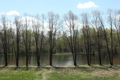 An even row of trees in the park. An even row of naked trees growing on a river bank in the park in the early beginning of spring stock photo