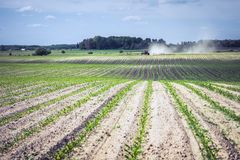 Even rows of corn and a sprayer in the distance, which introduces chemistry against weeds.  royalty free stock photos