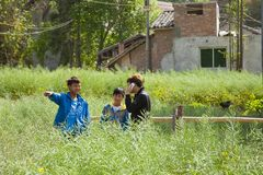 Technology in the Chinese Fields. Even in a small town in the mountains of China, three young Chinese boys waist deep in the green field next to an abandoned Royalty Free Stock Photo