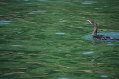 Sweet, Water,lake,Chilka,Birds,Enjoying,Sunsine,Black,Crane stock photo