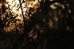 Evening światła 2 Zdjęcia Royalty Free