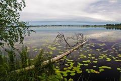 Evening湖 免版税图库摄影