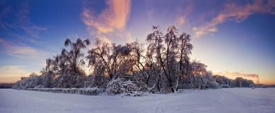 Evening above snowy forest Royalty Free Stock Images