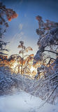 Evening above snowy forest Stock Images
