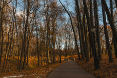 Evening alley in the park. Horizontal photo, photo took in Russian, photo is usable on picture post card, calendar, gardening Royalty Free Stock Image