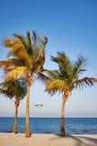 Evening at Atlantic ocean beach, Miami area Royalty Free Stock Photos