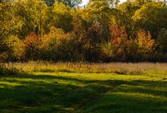 Evening in the autumn forest Royalty Free Stock Photography