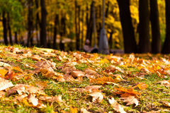 Evening in autumn park. The girl sits on a bench in the evening in autumn park Stock Photos