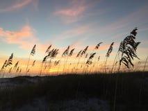 Evening at the beach. Evening skyline through sea grasses Stock Image
