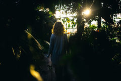 Evening in a beautiful garden. Beauty in a summer garden Royalty Free Stock Image