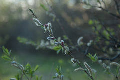 Evening befere Easter 4. Beautiful plant, silence, woods, going for a walk royalty free stock photo