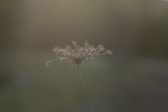 Evening befere Easter. Beautiful plant, silence, woods, going for a walk royalty free stock image