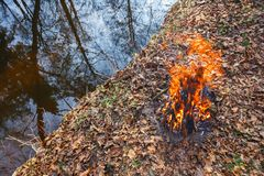 Evening bonfire on the bank of a forest stream stock photo