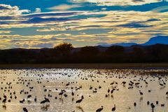 Evening at Bosque del Apache royalty free stock images