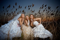 Evening brides Royalty Free Stock Photos
