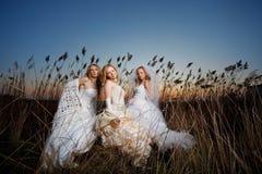 Evening brides Stock Photos