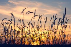 Evening bright landscape royalty free stock image
