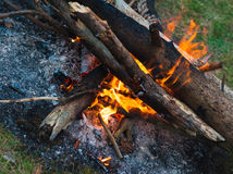 Evening burning bonfire Stock Images