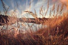 Evening calm lake Stock Image
