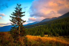 Evening in Carpathians Stock Photography