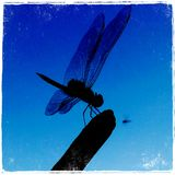 Evening click. Blue sky with a dragonfly stock photography