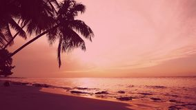 Natural pink sunset. Pink purple sunset sky cloud. Palm tree over amazing red sea stock footage