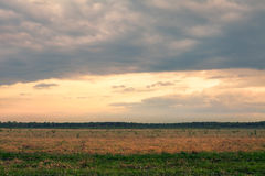 Evening cloudy landscape. With green grass and cold clouds Stock Photography