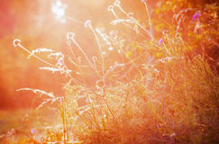 Evening colors of summer. The grass on the sun Stock Image