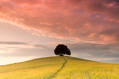 Evening colors in Tuscany. Soft evening colors in Tuscany with cloudy sky over a lone tree on a hill top Stock Photo
