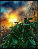 Evening Contrast. Sunset sky Plants Stock Photography