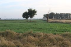 Evening view in the country of Punjab. An evening in the country of Punjab with sun setting, trees, fields and shrubs royalty free stock images