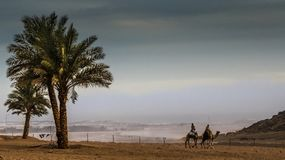 Evening desert landscape with palm trees and two bedouins on cam Stock Photography