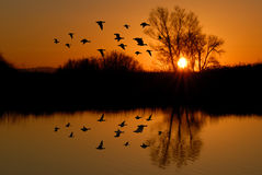 Evening Ducks Royalty Free Stock Photos