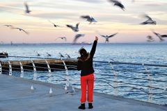 Evening feeding seagulls on the waterfront. Royalty Free Stock Photo