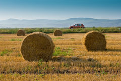 Evening field. Weath field with circular straw bales Royalty Free Stock Image