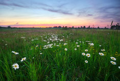 Evening in the field Stock Photos