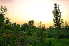 In the evening the field Royalty Free Stock Photos