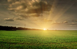 Evening field Royalty Free Stock Photography