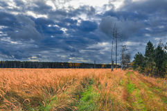 Evening in the field. Soon it will rain Royalty Free Stock Photo