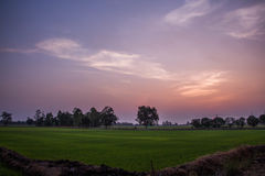Sunset. Evening field at sunrise. Orange sky Stock Photography
