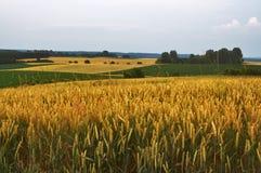 Evening fields Stock Photography